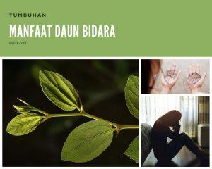 manfaat daun bidara untuk mengusir jin